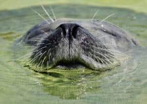 Führung durch das Nordsee-Aquarium mit Fütterung @ Nordsee Aquarium