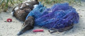 "Wanderausstellung ""Müll vermeiden – Meere schützen"" @ Nordsee Aquarium"
