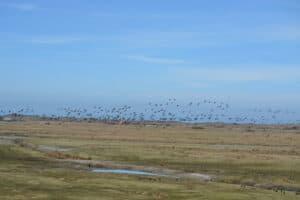 Vogelbeobachtung am Tüskendörsee @ Tüskendör-See